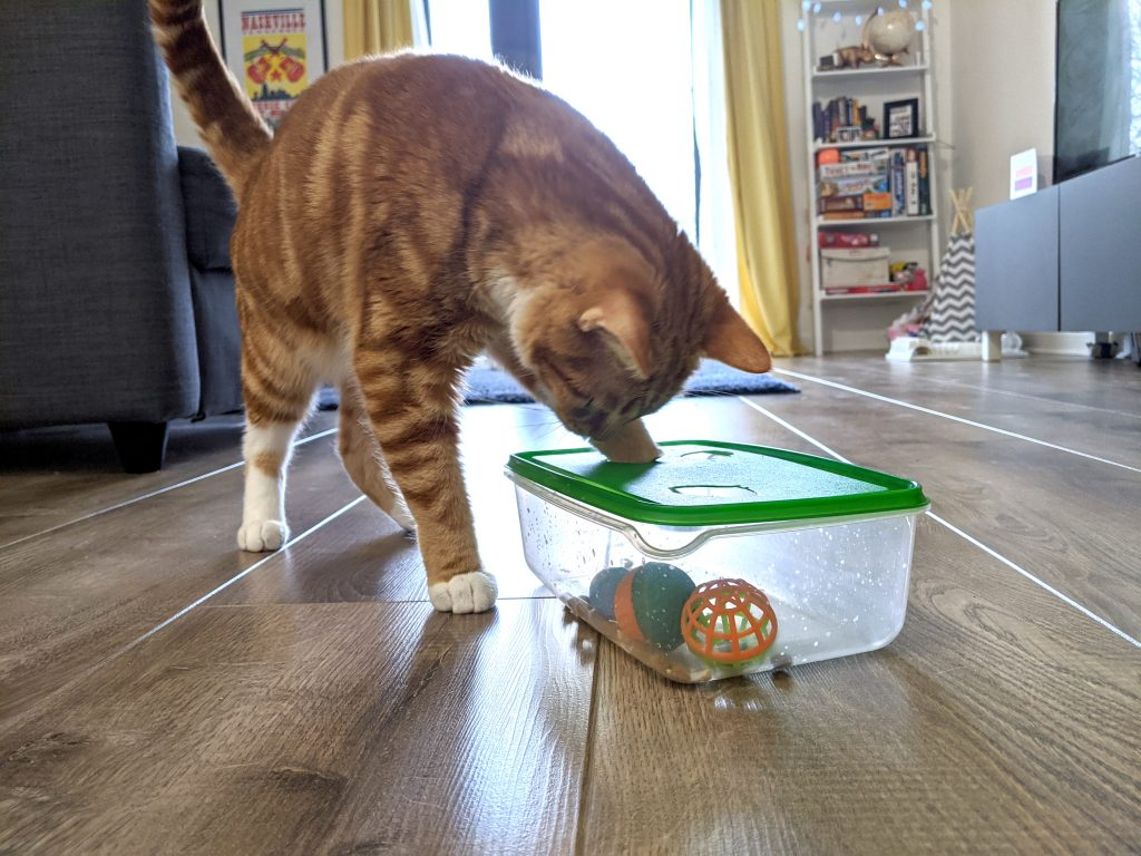 A cat playing with a DIY cat toy - a homemade cat puzzle feeder