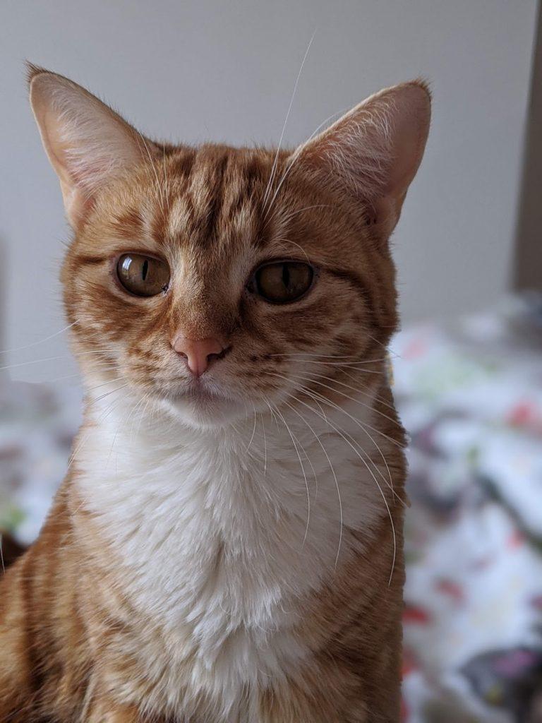 a calm cat looking at camera